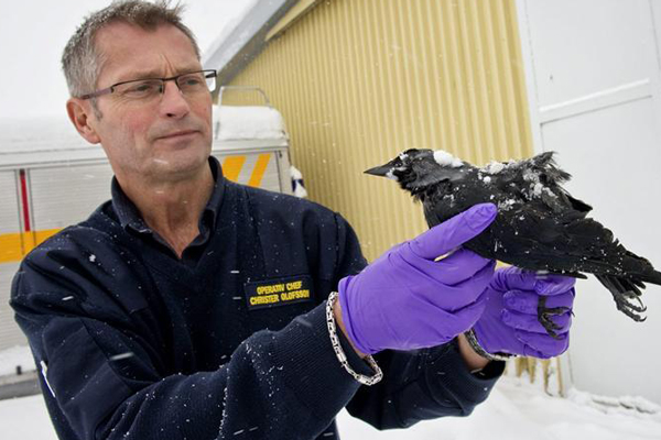 Rescue chief Christer Olofsson with one of the dead birds in Falkoping (Reuters)