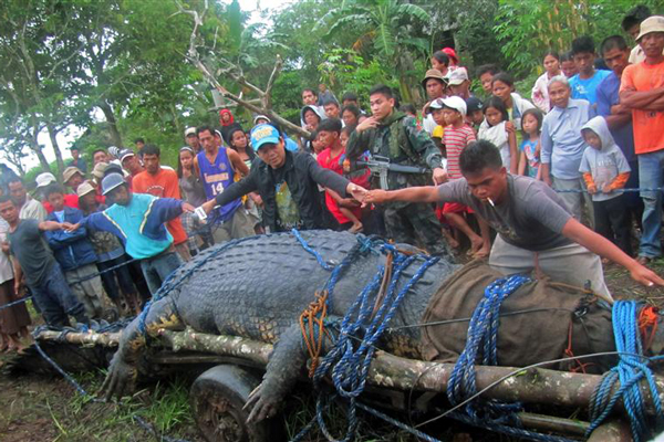 Residents use their hands to measure the saltwater crocodile after it was caught in southern Philippines (Reuters)