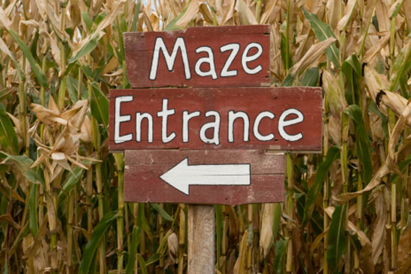 The maze at Connors Farm in Danvers has pathways totalling 11km long