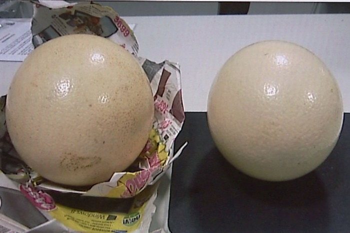 The eggs, weighing 1.5kg each, were found wrapped in newspaper inside the woman's luggage