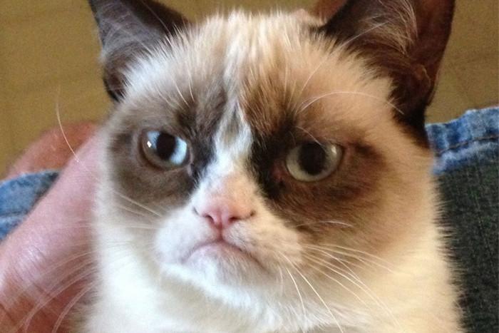 Grumpy cat - an instant online hit