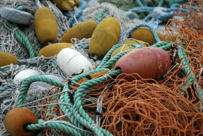 Aside from tuna, sea turtles, sharks and juvenile fish have often been caught and killed