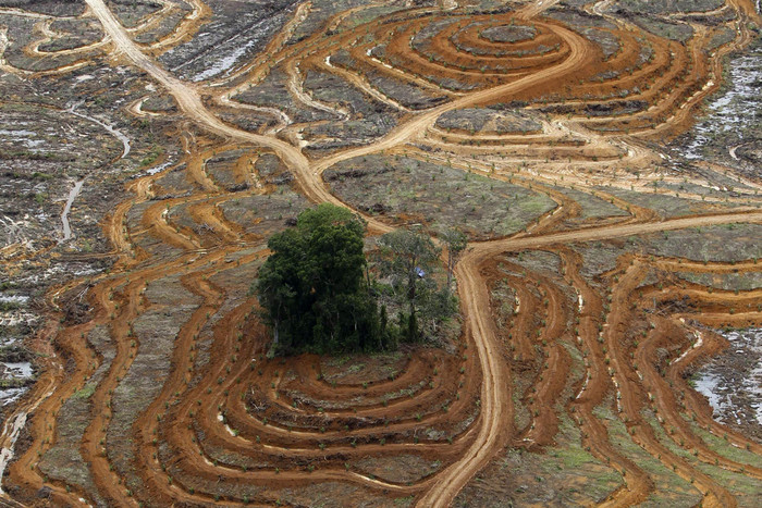 An aerial view of a cleared forest area under development for palm oil plantations in Indonesia's central Kalimantan province (Reuters)