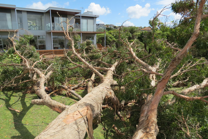 Tornado damage in west Auckland (Photo: Dylan Moran/3 News)