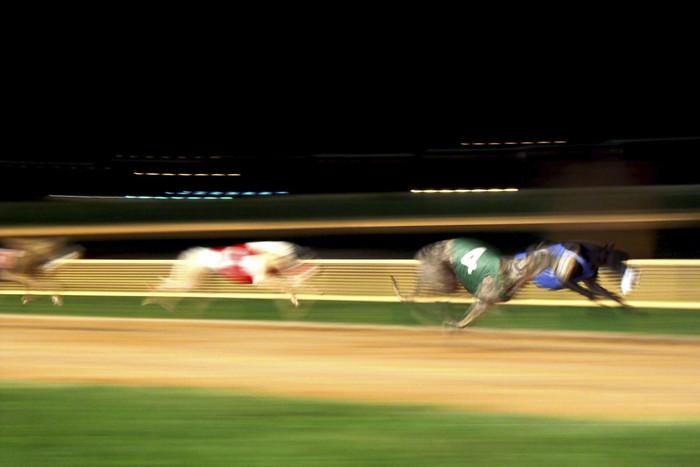 Greyhounds racing (file)