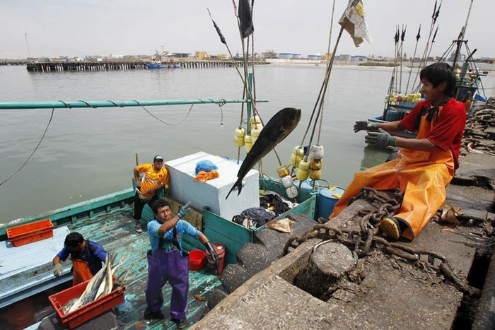 Fishermen unload fish from a ship's storage freezer at Peru's northern port of Chimbote (Reuters)