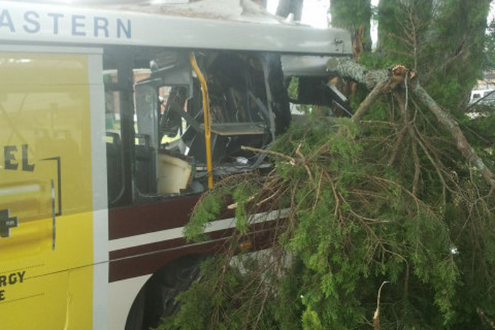 The bus crashed into a tree off Hill Road (Photo: Allana Partridge)