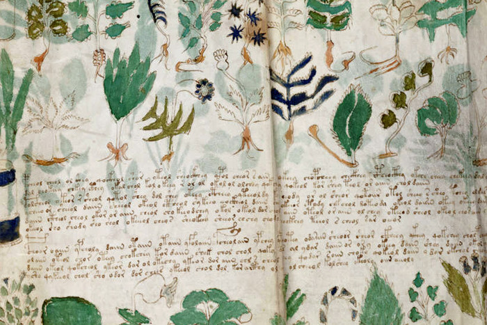 Excerpt from the Voynich manuscript