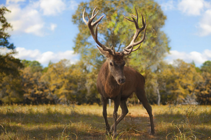 A pet trophy stag was killed and beheaded (Flickr/Justin Jensen)