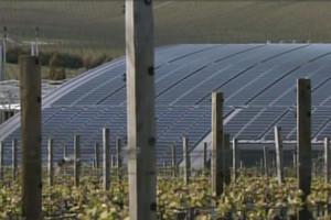 Yealands winery (Newshub.)