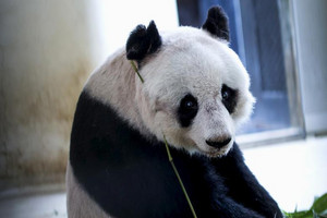 Jia Jia's equivalent age in human years was around 114 years old (Reuters / file)