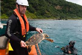 Koha the turtle (NIWA/Facebook)