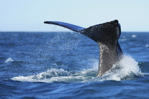 Marine environment report highlights lack of data