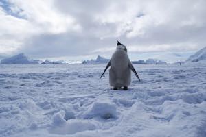 Huge Marine Protection Area greenlit for Antarctica's Ross Sea