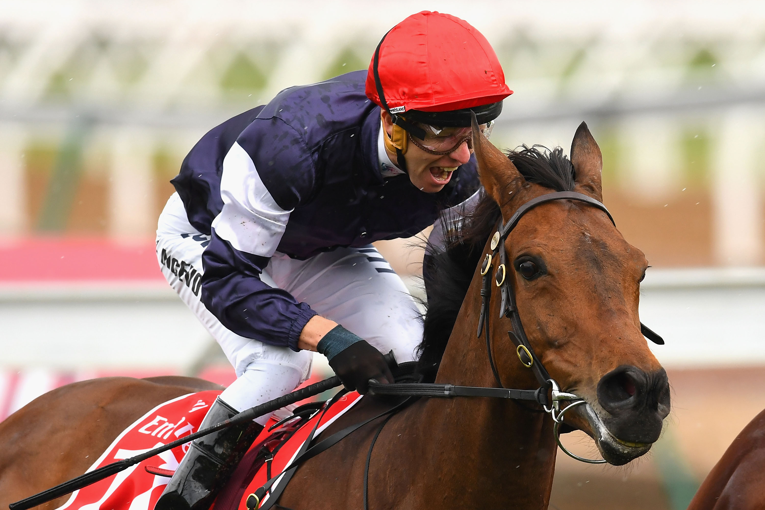 Europe is the key to 2016 Melbourne Cup win