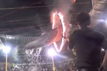 A dolphin jumps through a flaming hoop (Dolphin Project/Vimeo)