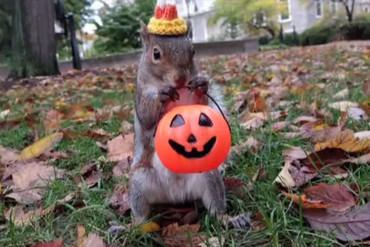 A squirrel (APTN)