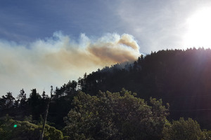 Fire starts in Wellington pine forest