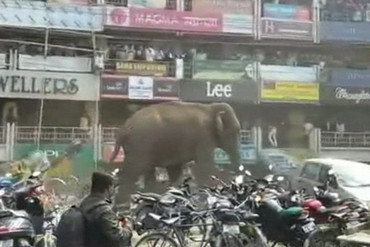 Wild elephant goes on rampage in India