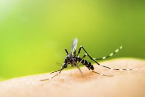 In Tonga, Zika cases skyrocket