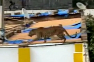 Leopard goes on the attack at school in India