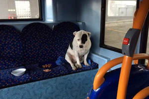 Buster wouldn't get off the bus he was left on (Ricky Hatton)