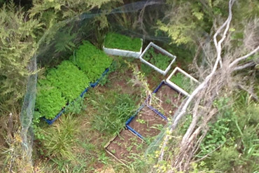 An aerial view of a Northland cannabis plot taken during Operation Dee (Supplied)