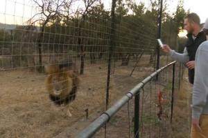 Video: Black Caps get back to nature on Safari