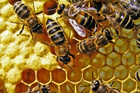 Beekeepers stung by swarm of hive thefts