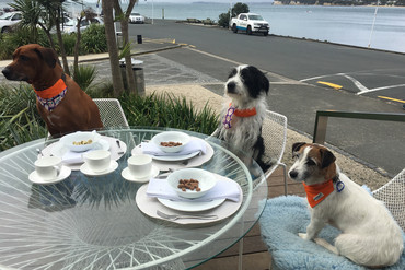 Auckland doggies enjoying a posh meal at a Hipgroup cafe