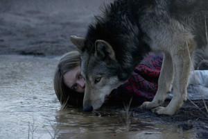 Wild has been shown at the Sundance, Rotterdam and San Francisco film festivals