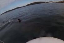 The giant shark (Ian Watkins)