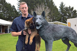 Police pup Orr's in the family business (Police Dog Trust / Facebook)