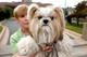 Shellie Goldstein of Gaithersburg, Maryland, USA holds her Shih Tzu therapy dog Emma (Reuters)