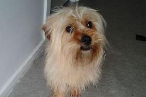 Families end custody battle for beloved dog 'Bear'