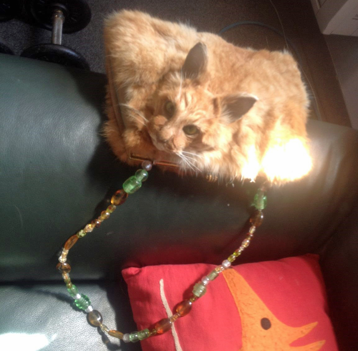 'Real glamour puss': Uproar over handbag made from dead, feral cat